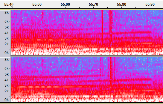 Clicky example spectrogram view.png